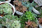 唐津焼×多肉植物寄せ植えワークショップ